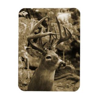 Trophy Deer Rectangular Photo Magnet