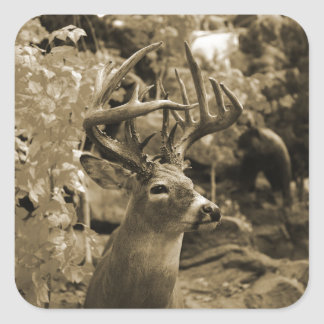 Trophy Deer Square Sticker