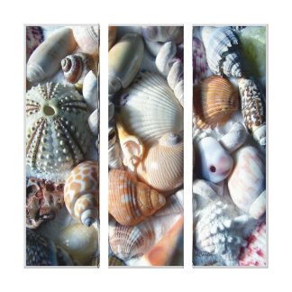 Tropical Beach Shells Photography Canvas