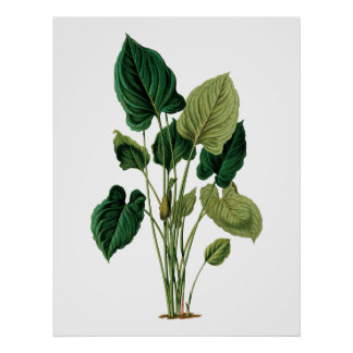 Tropical big leaves botanical print philodendron