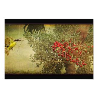 Tropical Bird Nesting in Christmas Palm Tree Photo