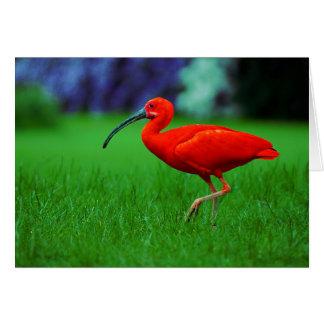 Tropical Bird With Long Beak Card