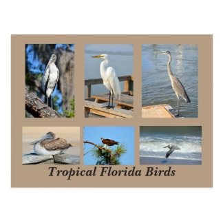 Tropical Birds of Florida Postcard