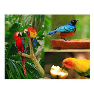 Tropical Birds Postcard