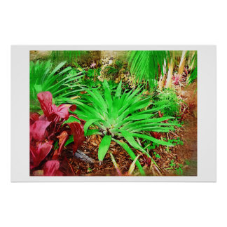 Tropical Bromeliad - Afternoon in the Greenhouse Posters