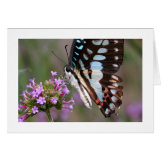Tropical Butterfly Card