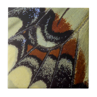 Tropical butterfly close-up ceramic tile