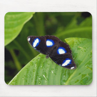 Tropical butterfly mousepads