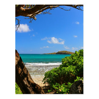Tropical Caribbean Beach Postcard
