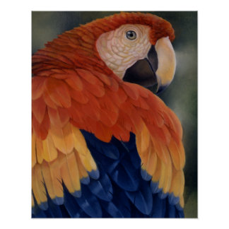 """Tropical Cool"" - Macaw Poster"