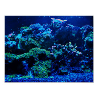 Tropical Coral Reef Poster