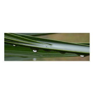Tropical Dew Profile Card Pack Of Skinny Business Cards