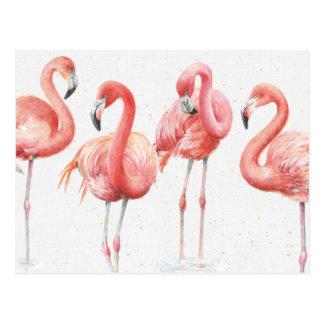 Tropical | Family of Flamingos Postcard