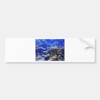 Tropical Fish Bumper Sticker