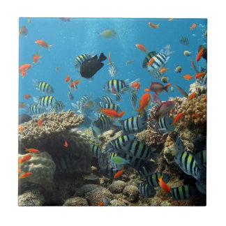 Tropical Fish Chaos Tile