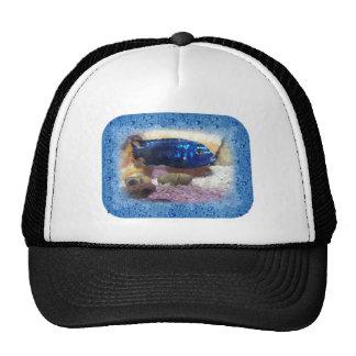 Tropical Fish Digital Watercolor Hats
