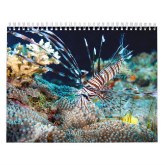 Tropical Fish Great Barrier Reef Coral Sea Gift Wall Calendars