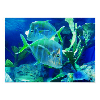 Tropical Fish in Beautiful Blues and Greens Poster
