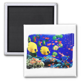 Tropical Fish in Coral Sea Refrigerator Magnets
