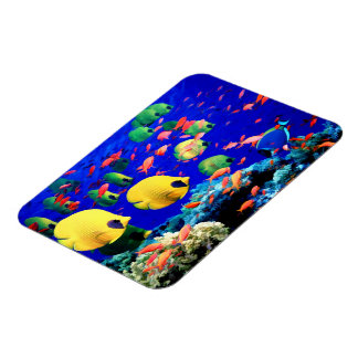 Tropical Fish in Coral Sea Magnets