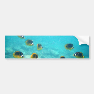 Tropical Fish in Hawaii Bumper Sticker