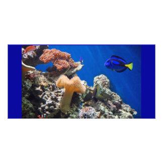 TROPICAL FISH SEALIFE CORAL DIGITAL REALISM OCEAN PHOTO GREETING CARD