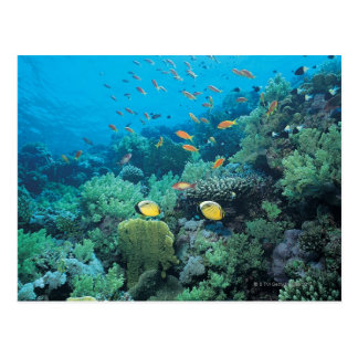 Tropical fish swimming over reef postcard