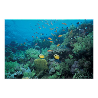 Tropical fish swimming over reef posters