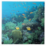 Tropical fish swimming over reef tiles
