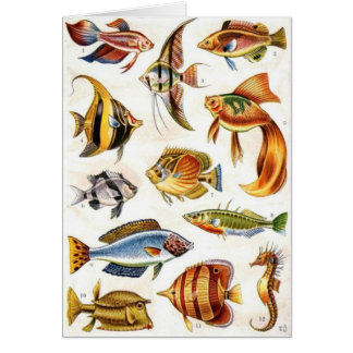 Tropical Fishes Card
