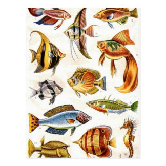 Tropical Fishes Postcard