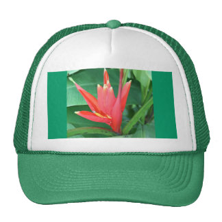 Tropical Flower Bird of Paradise Hat