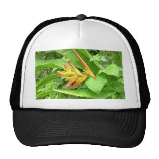 tropical flower hat