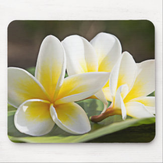 Tropical Flowers Mouse Pad