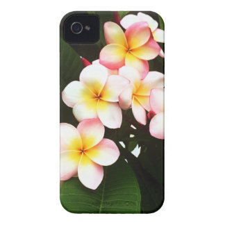Tropical Frangipani Flower iPhone 4 Case