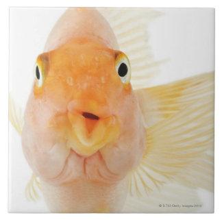 Tropical freshwater fish ceramic tile