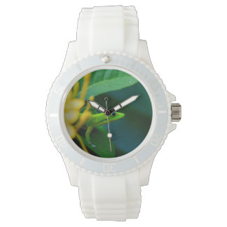 Tropical Gecko Watch