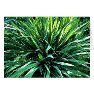 Tropical Grass Greeting Card