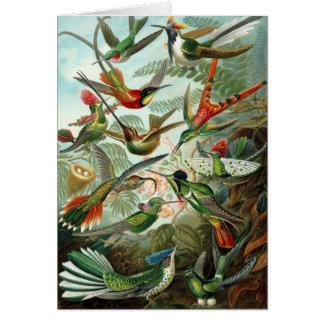 Tropical Humming Bird Card