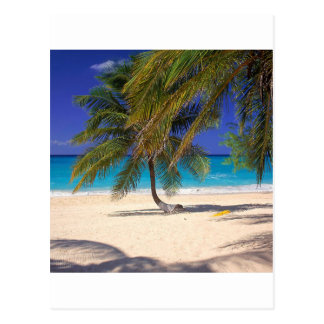 Tropical Island Seven Mile Grand Cayman Postcard