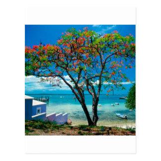Tropical Island Tropical Escape Bahamas Postcard