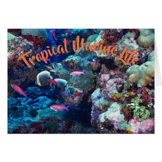 Tropical Marine Life Card