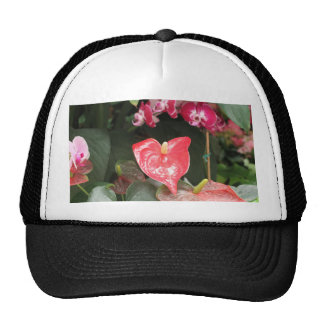 Tropical Orchid flowers Hats