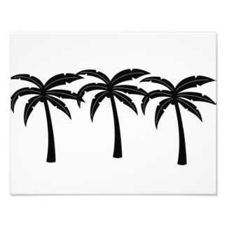 Tropical Palm Trees Photo Print