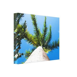 Tropical Palm Treetops Canvas Print