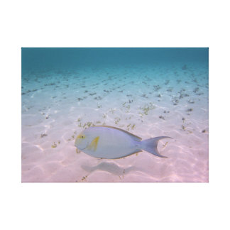 Tropical Paradise Maldives Lagoon Coral Fish Canvas Print