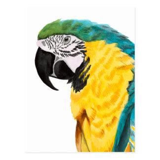 Tropical Parrot Bird Postcard