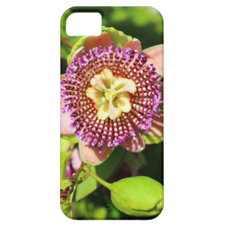 Tropical Passion Fruit Flower iPhone 5 Cases