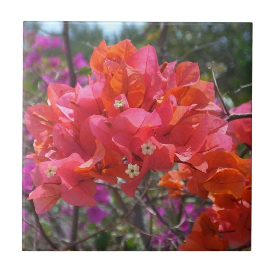 Tropical Pink Bougainvillea Small Square Tile