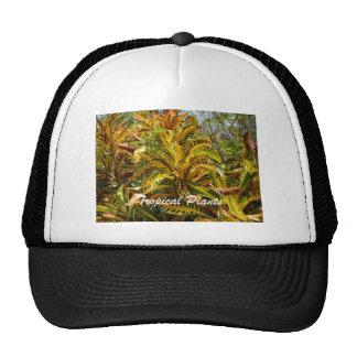 Tropical Plants Mesh Hats